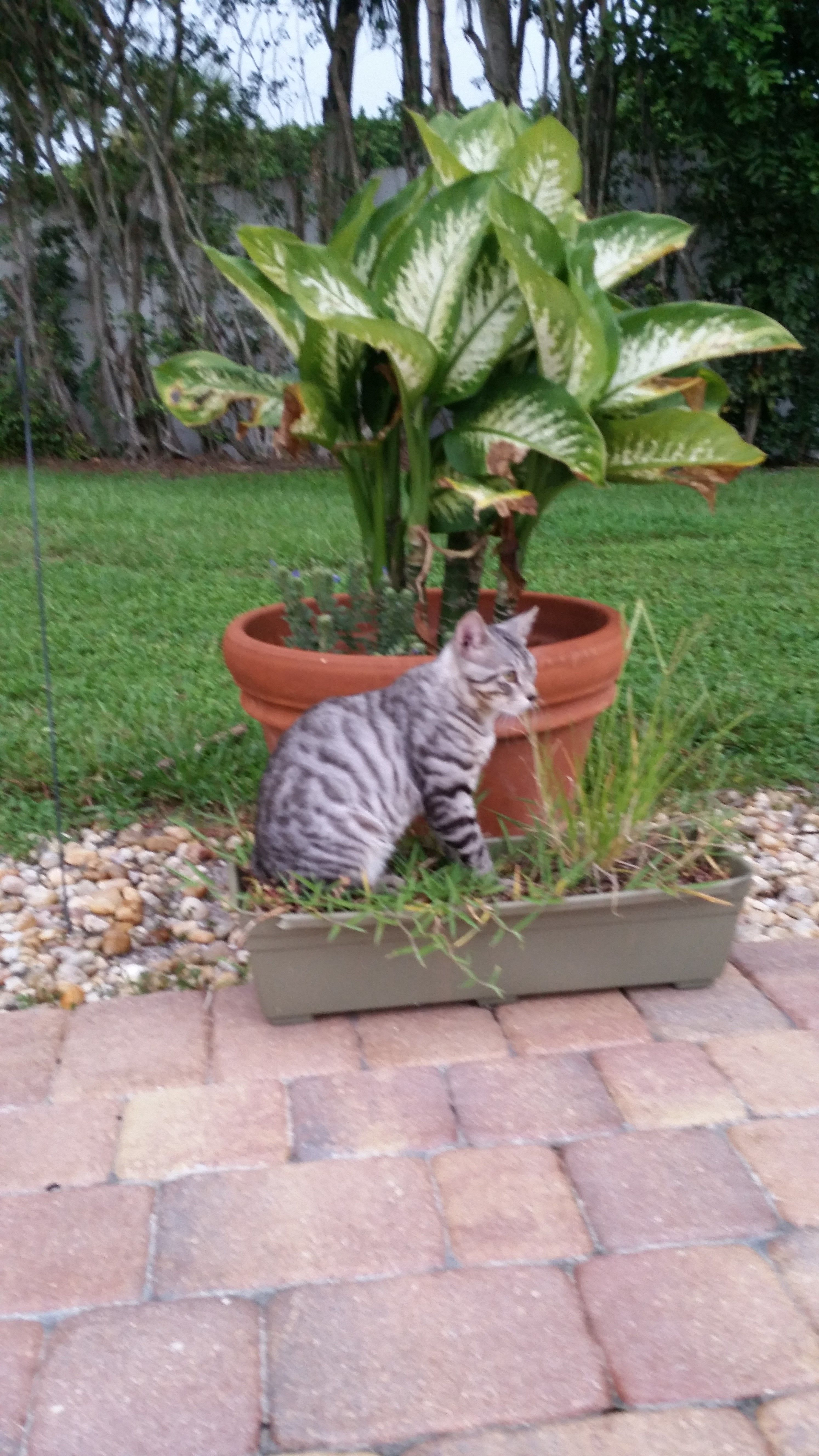 potted pussy waiting to pounce
