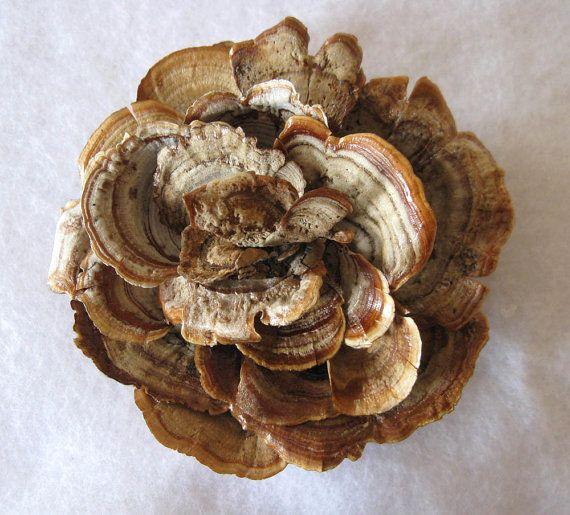 Rustic Woodland Wild Mushroom Pendant and Pin by woodlandgems, $125.00