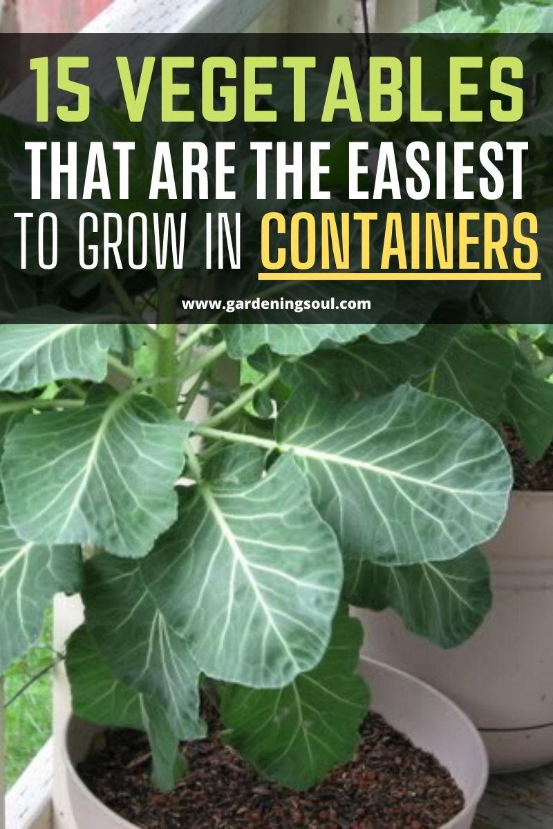 15 Vegetables That Are The Easiest To Grow In Containers  #outdoorherbgarden