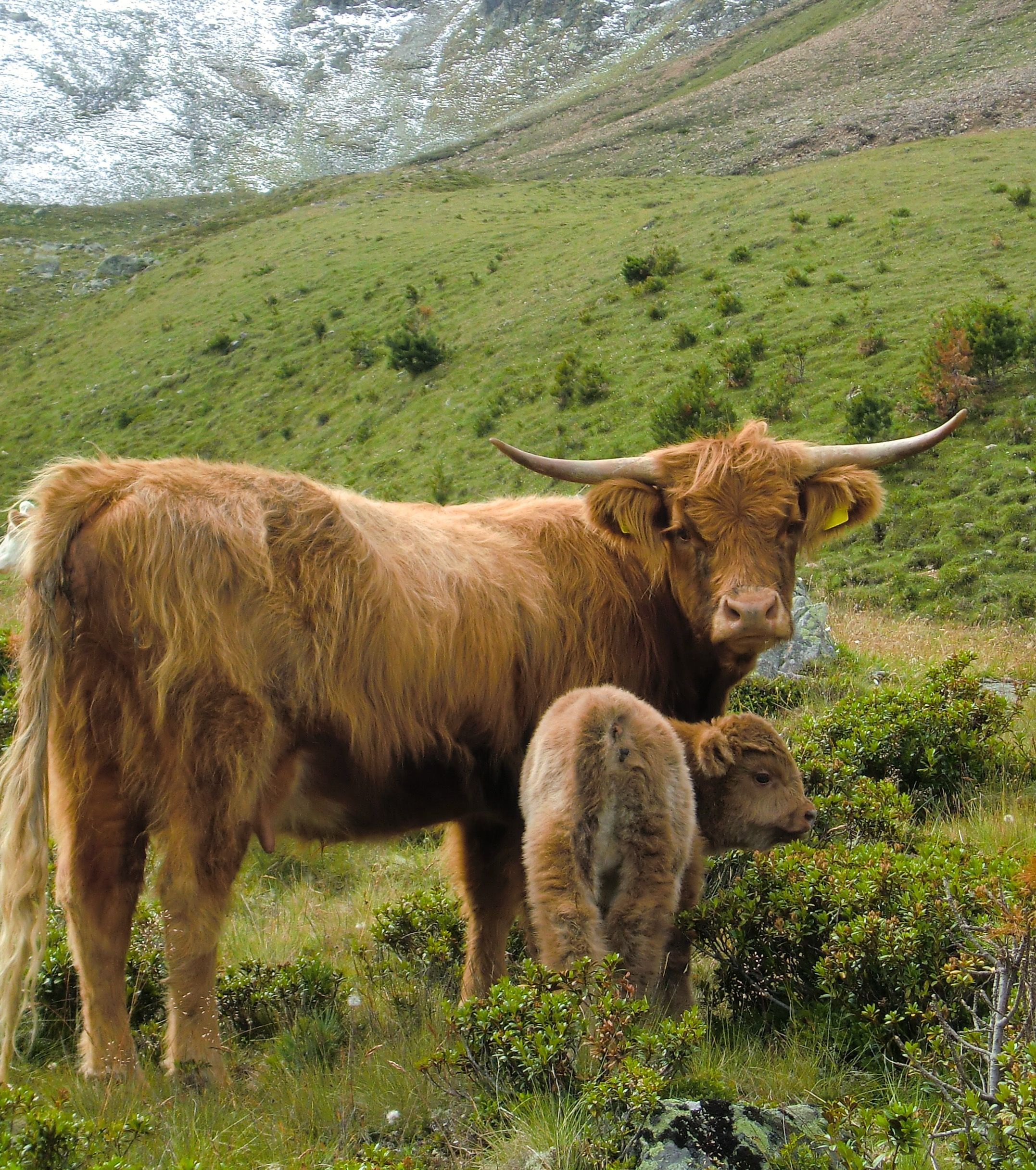 Pin by Heather Roberts on HIGHLANDS | Scottish highland ...