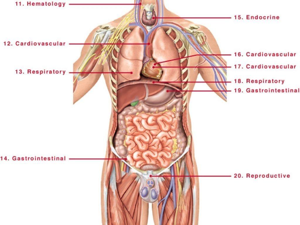 anatomical diagram of full body wiring diagram expert full body diagram labeled full body diagram [ 1024 x 768 Pixel ]