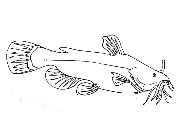Female Catfish Coloring Pages Best Place To Color Coloring Pages Color Coloring Pictures