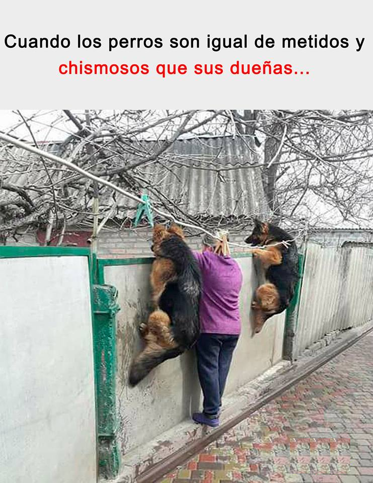 Jajajajajajajajaja Que Perros Tan Chismosos Humor Divertido Sobre Animales Humor De Perros Fotos Divertidas De Animales