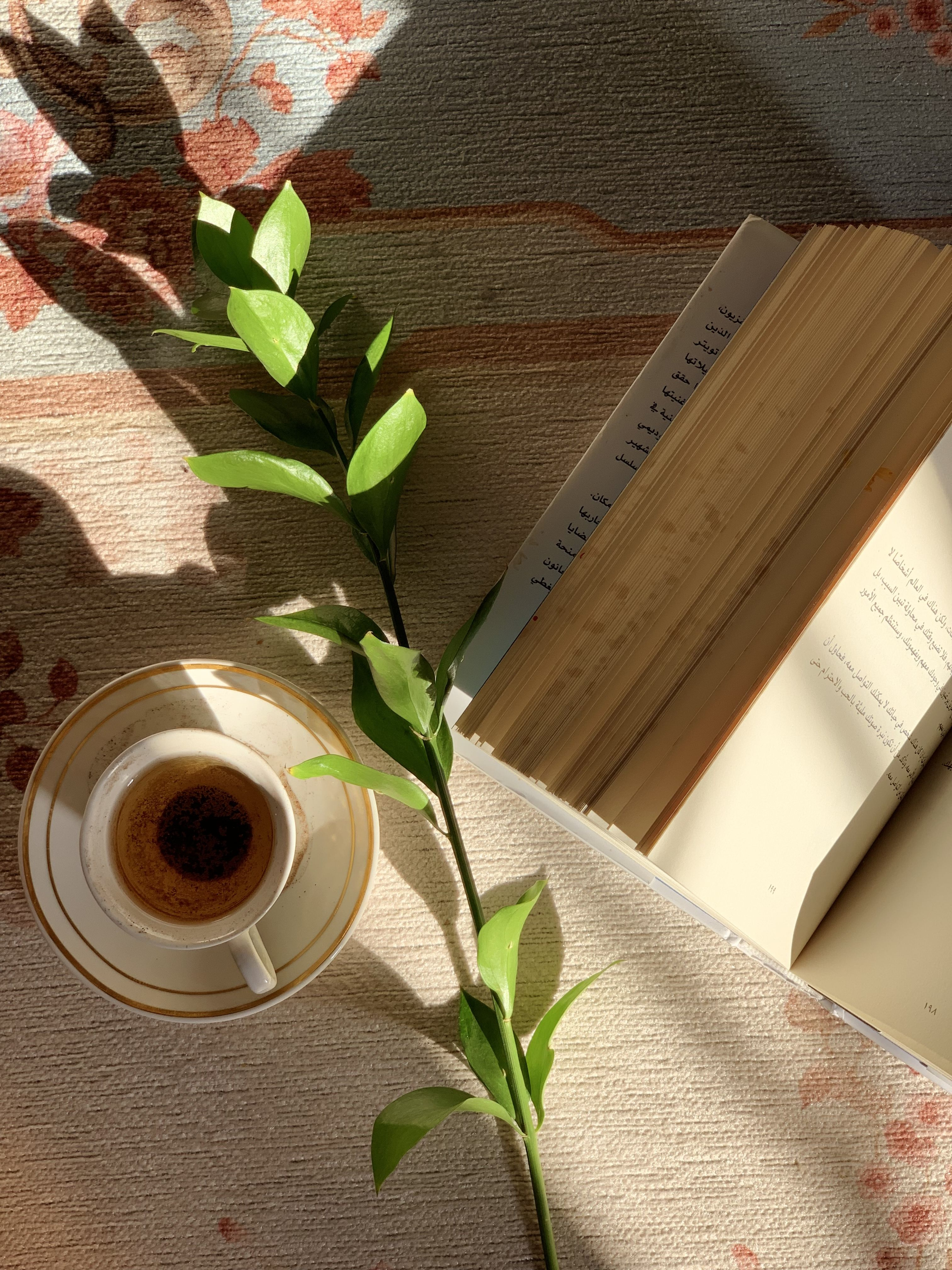 كتاب وقهوة Cinnamon Sticks Spices Glassware