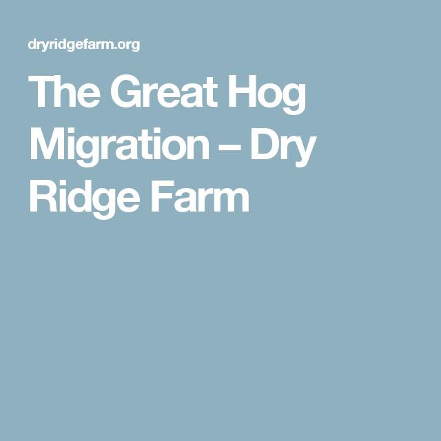 The Great Hog Migration – Dry Ridge Farm