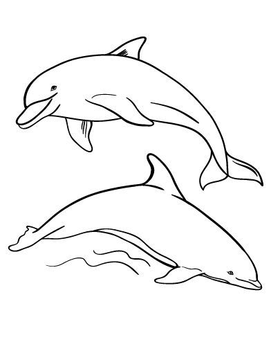 Printable Dolphin Coloring Page Free PDF Download At Coloringcafe