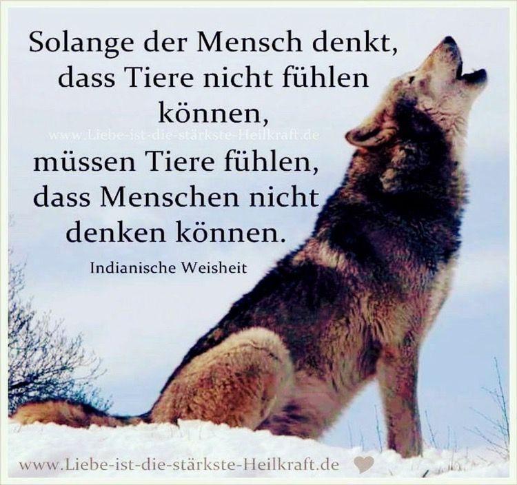 Schöner Spruch über Wölfe