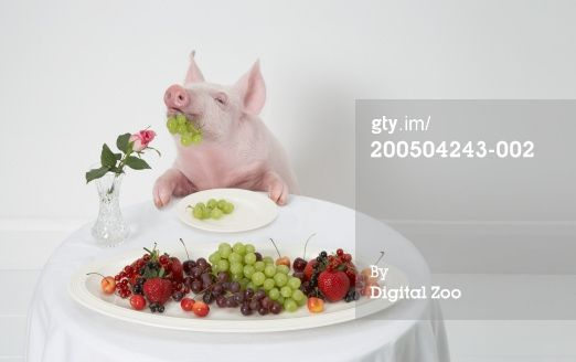 Pig Eating Grapes Pig Pics Baby Pigs Pig Art