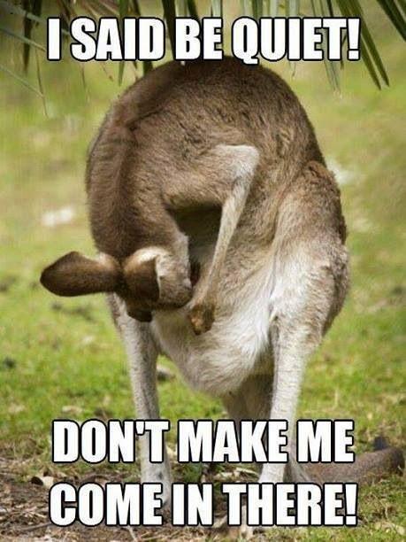 Funny Zoo Memes : Kangaroo memes pinterest kangaroos and