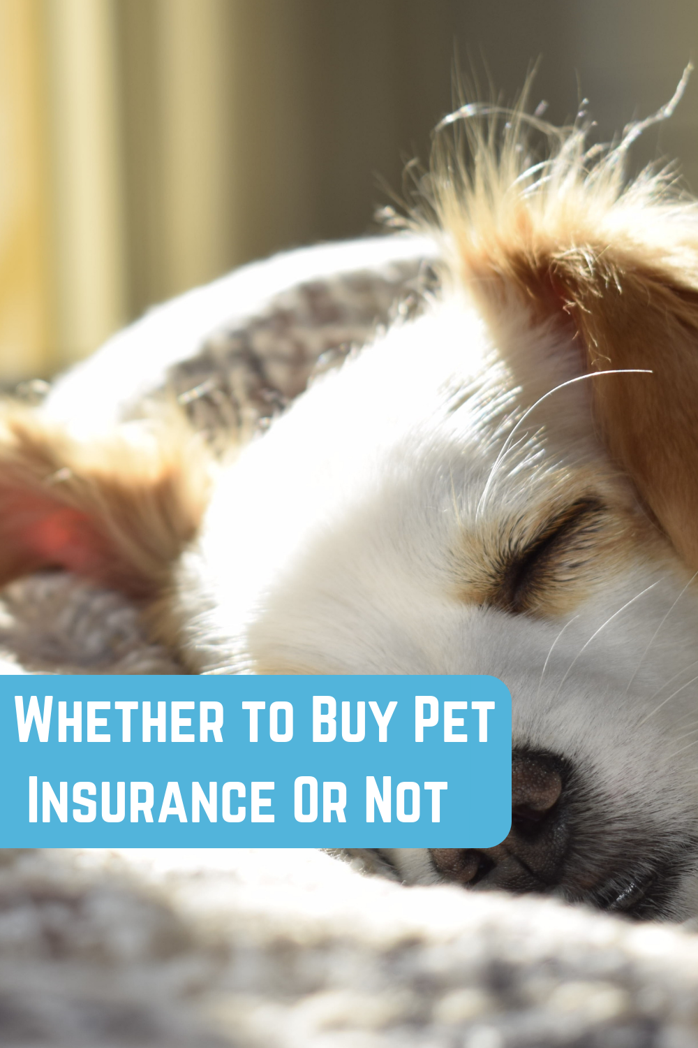 Here S A Helpful Article About Pet Insurance From German
