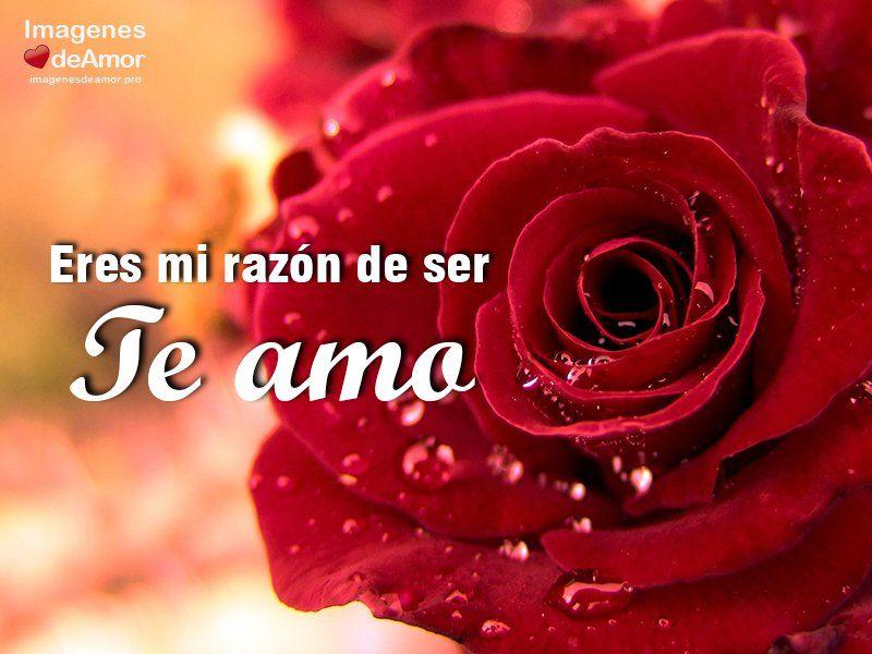 10 Imagenes De Rosas Hermosas Para Decir Te Amo Frases De Rosas