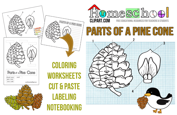 Pine Cone Science Printables Pinterest Pine Cone Pine And