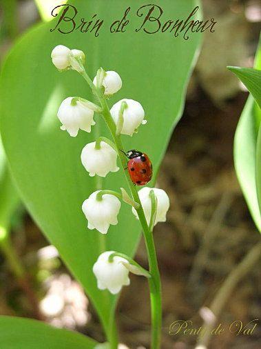 1er mai brin de bonheur ladybug lady bugs and tattoo - Photo de brin de muguet porte bonheur ...