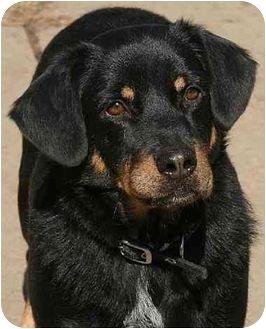 Middletown Oh Basset Hound Dachshund Mix Meet Goofy A Dog For