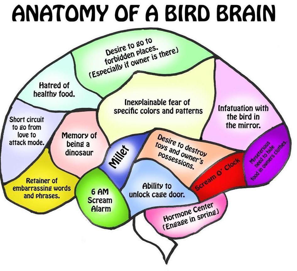 parrot anatomy for kids - Google Search   Bird Humor   Pinterest ...