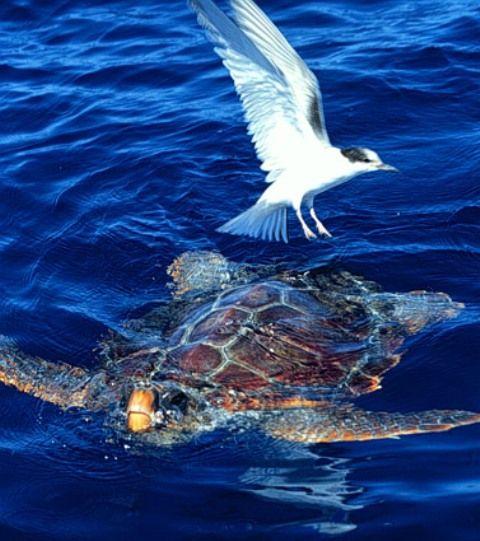 monte gutschein sea life