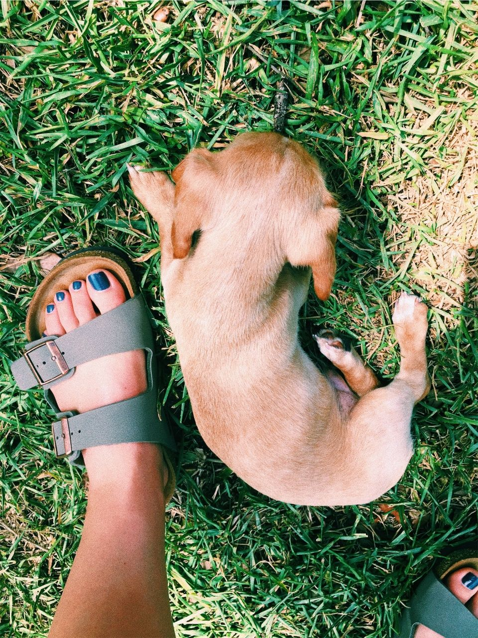 Vsco Aleenaorr Collection Puppy Paws Puppies Cute Animals