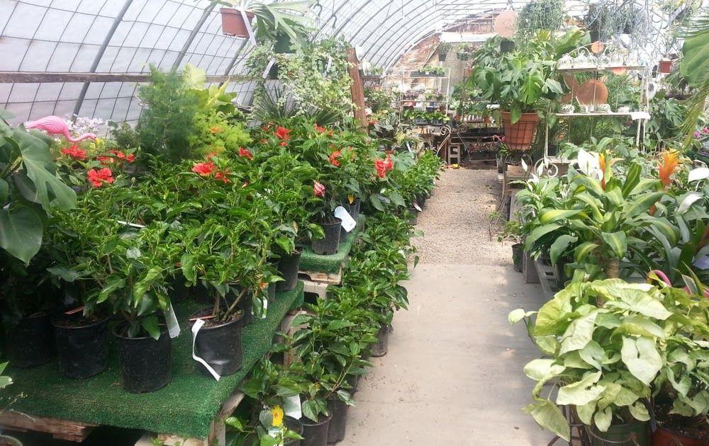 Rehms Nursery Garden Center Albuquerque Nm With Images Garden