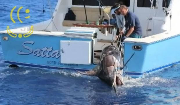 MUNDO – Adolescente de 17 anos fisga peixe-espada de 4,3 metros e 314 quilos | The New YooKer Times http://www.yooker.com.br/br/mundo/TheNewYookerTimes-mundo-adolescente-de-17-anos-fisga-peixe-espada-de-43-metros-e-314-quilos.html