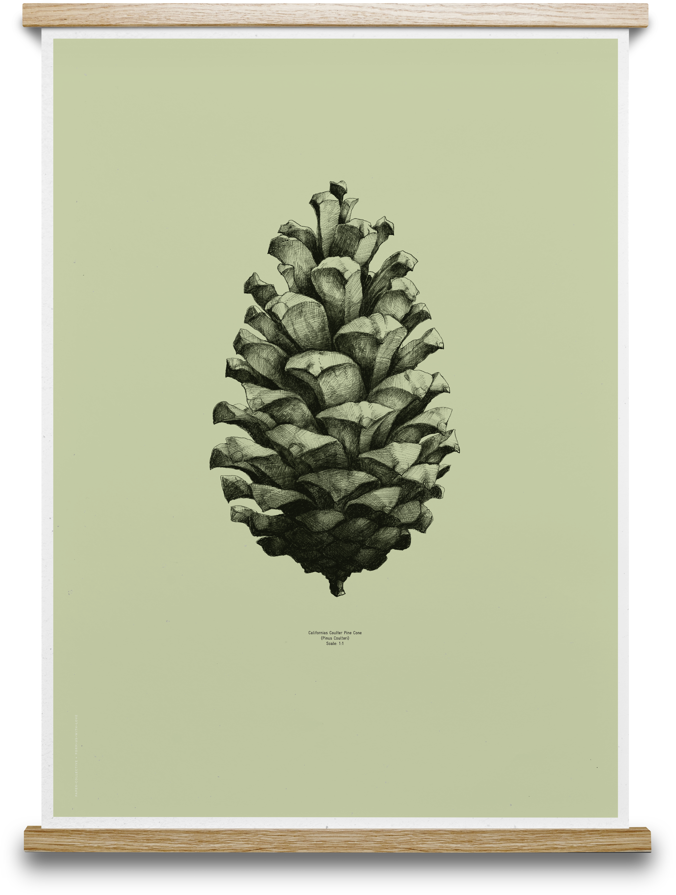 1 1 Pine Cone light forest green in 2018