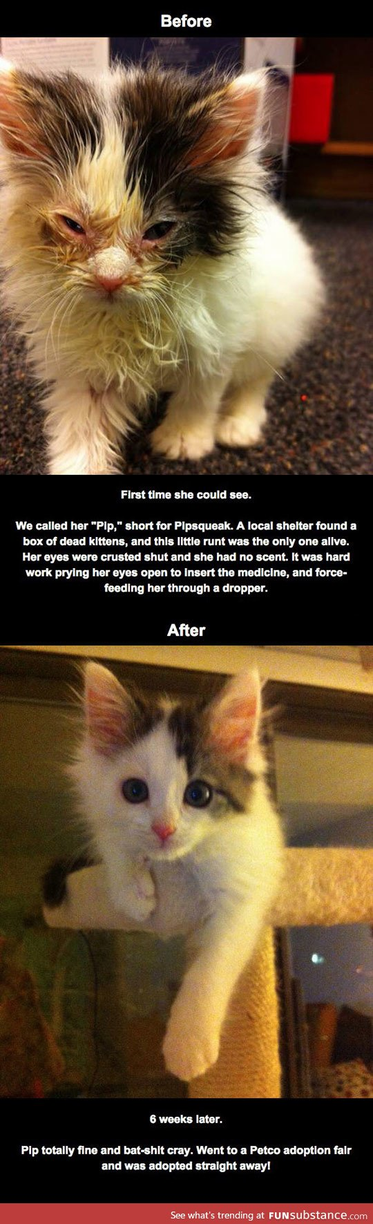 Rescued Kitty Initially Blind From Eye Infection Recovers Sight Funsubstance Rescue Dogs Puppies And Kitties Best Dogs