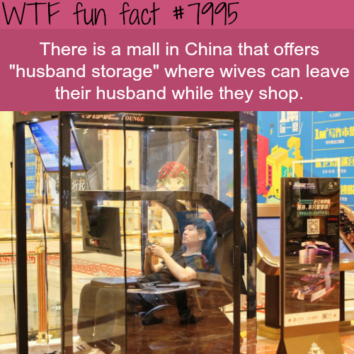 Wtf Facts Funny Interesting Weird Facts Awesomepeople Fun