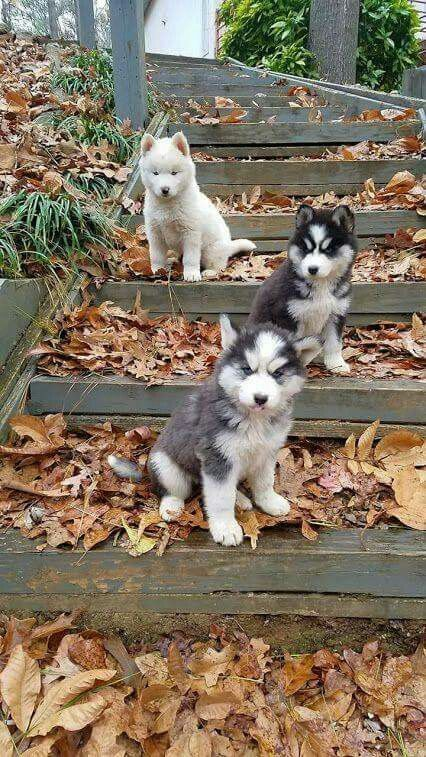 3 Steps Of Puppies Waiting For Puppies Cute Animals