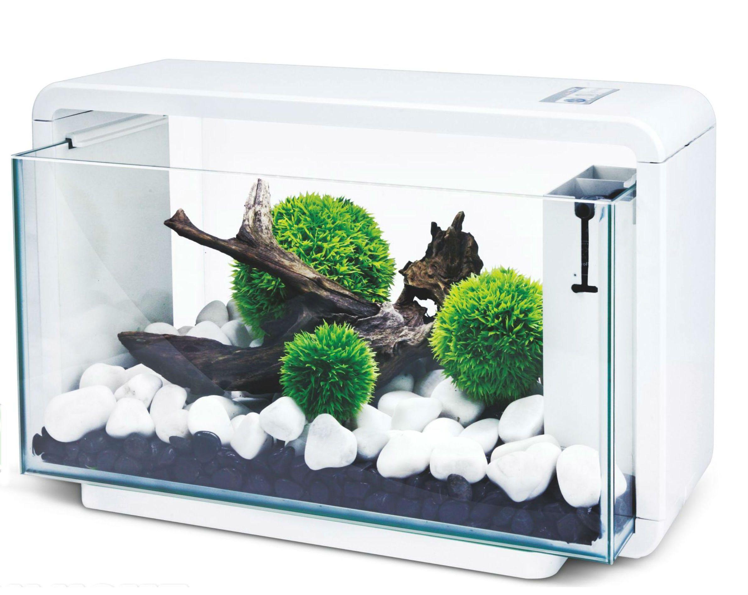 Deco-Tank 25 | Pinterest | Aquariums, Fish tanks and Fish