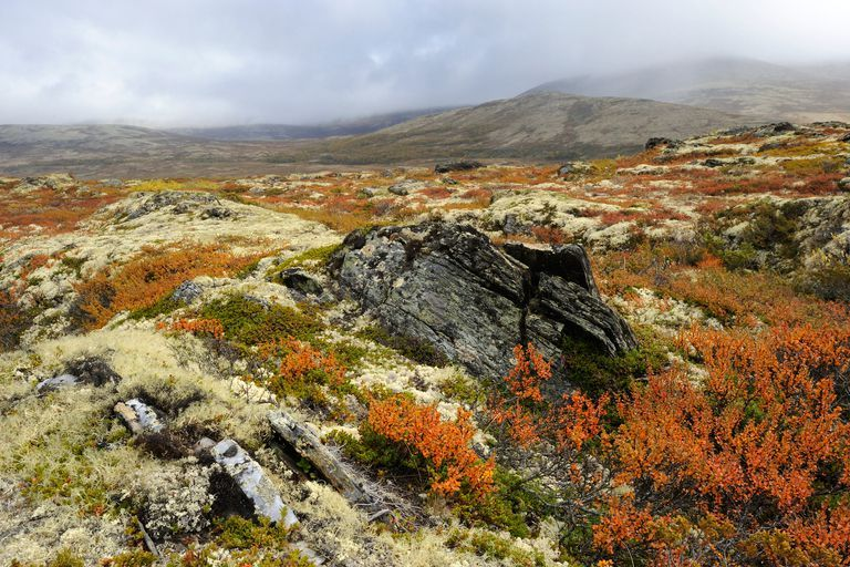 The Biomes of the World Biomes, Arctic tundra, Nature photos