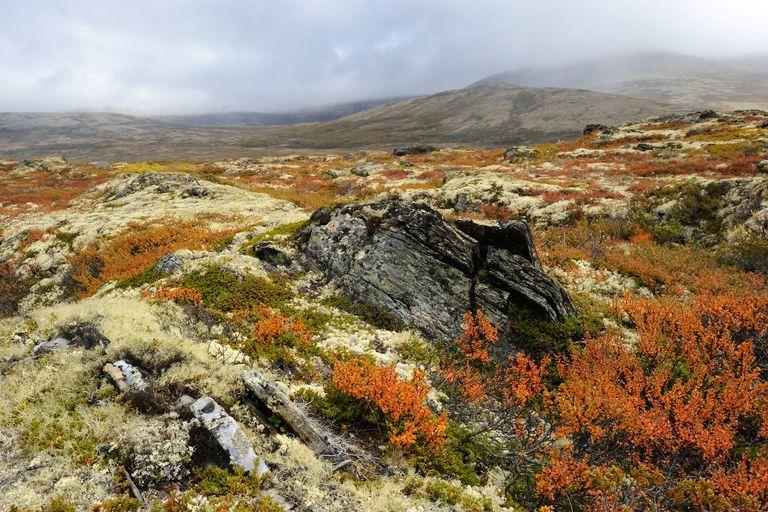 Arctic Tundra Plants with Names arctic tundra zone image