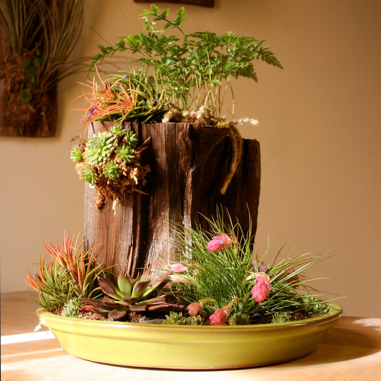 Mountain Dish Garden By Bluejourney On Etsy Tillandsia Dish