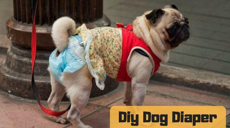 Diy Dog Diaper Make Diaper Alternative At Your Home Dogs