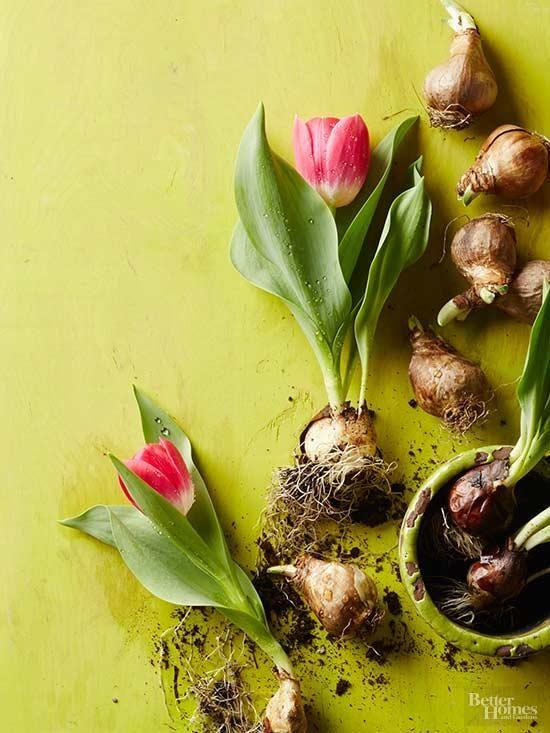 Step-by-Step Spring Bulb Planting Guide | Красота