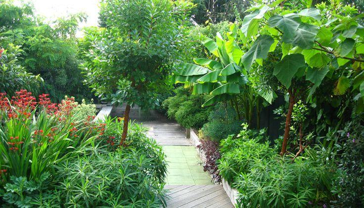 Lush Sub Tropical Backyard Garden Zone 6 7 Tropical Looking
