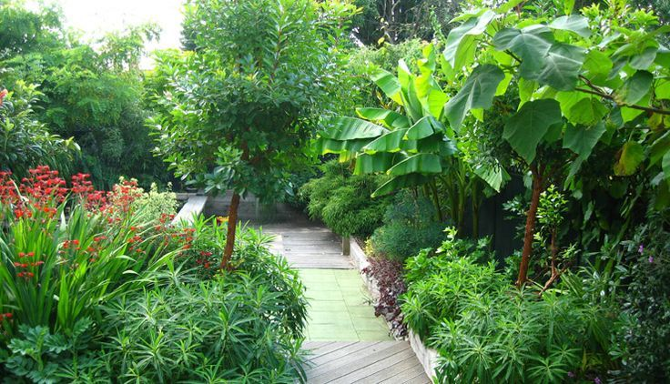 Lush Sub Tropical Backyard Garden Zone 6 7 Tropical Looking Backyard Garden Landscape Small Backyard Gardens Garden Layout