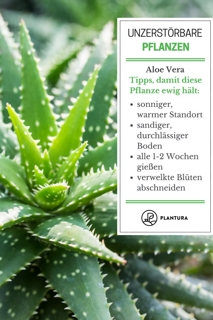 Las 10 Plantas Que Casi No Matan Plants Herb Garden Design Plant Design
