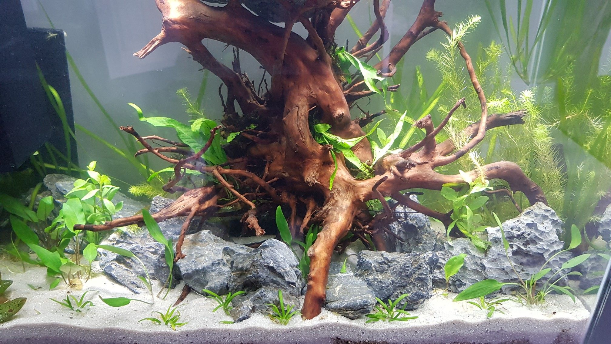 Superfish Home 80 Redmoor Root Seiryu Rock Stone Tetra Complete Substrate Pettex Roman Gravel Pewter Sand Diy Fish Tank Aquascape Fish Tank