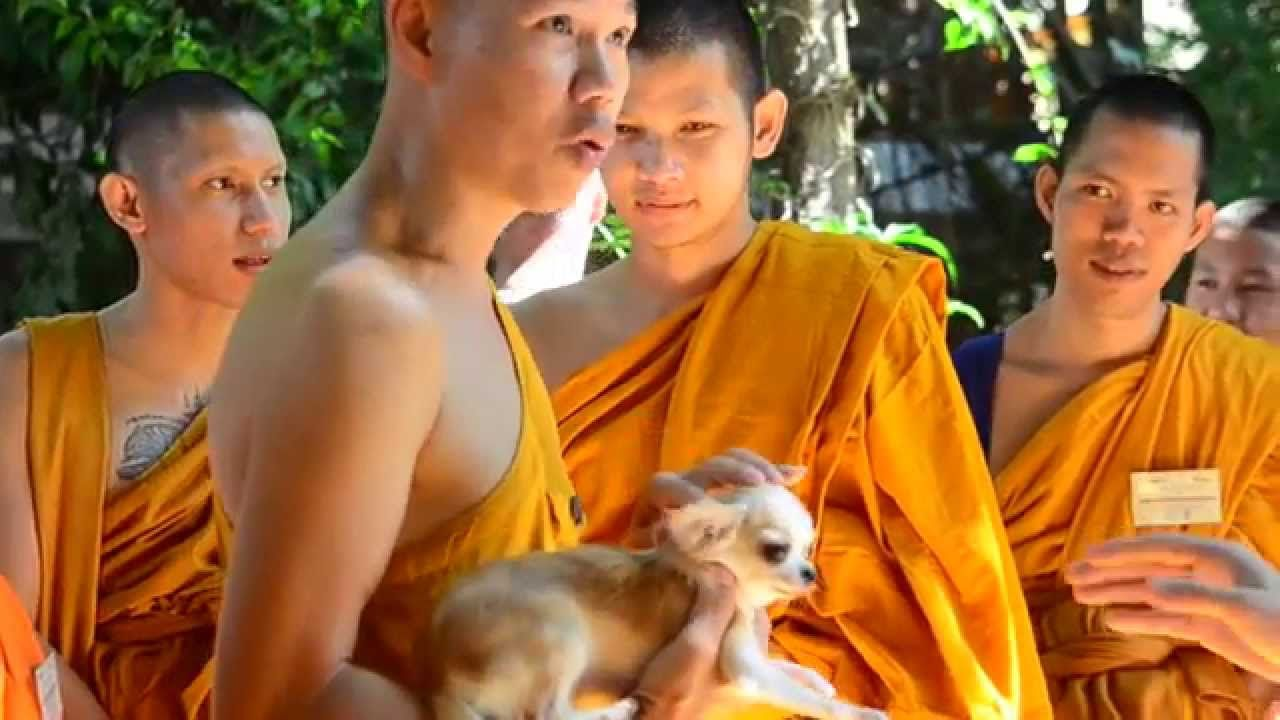 Video Temple Cats And Dogs Humane Care Training For Monks