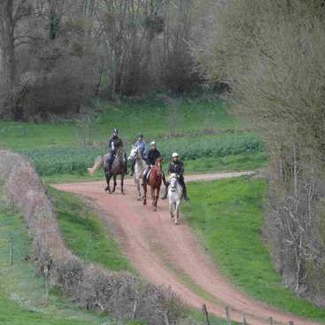 Some help in a horse stud in Burgundy, practice french and ride gratis - workaway.info