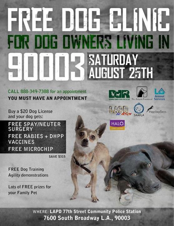 Free Dog Clinic Angel City Pit Bulls Saturday August 25 From