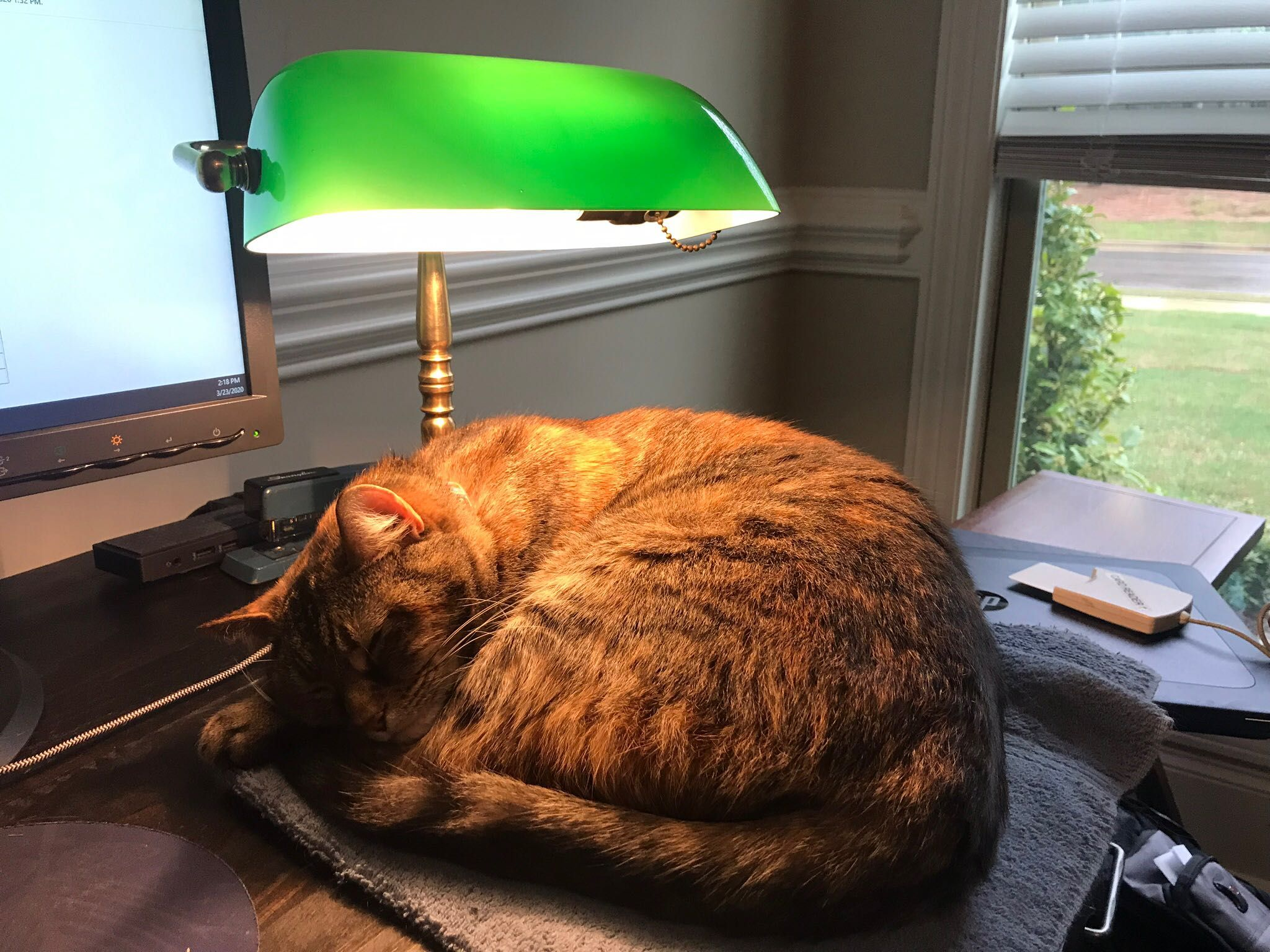 Chessie Loves To Sleep Under My Desk Lamp Https Ift Tt 2ugndia In 2020 Worms In Dogs Pet Holiday Moving With A Dog