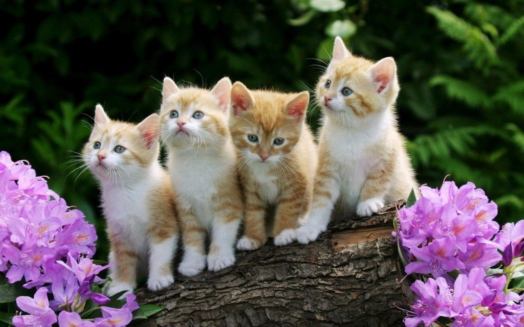 Cute Curious Kittens Hd Desktop Wallpaper Available For Free