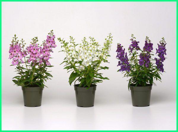 Tanaman Bunga Hias Yang Cantik Di Dalam Pot Silahkan Menanan Tanaman Bunga Cantik Gambar Bunga