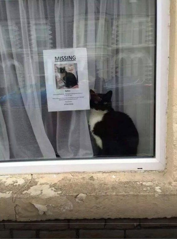 Missing Cat Doesn T Look Like It S Missing Funny Animals Missing Cat Poster Funny Pictures