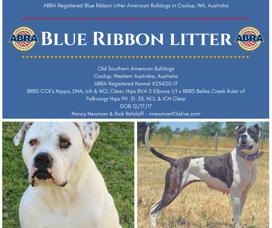 Abra Bulldog Family Please Help Me In Congratulating Nancy Richard On Their Blue Ribbon Litter American Bulldog Breeders American Bulldog Puppies For Sale