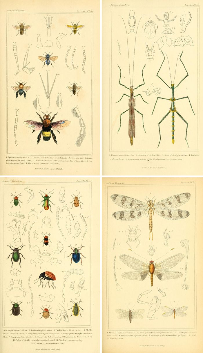 Free vintage printable insect images make great wall art! | art and ...