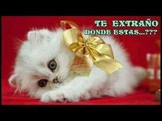 Red Cat Wallpaper Desktop Backgrounds Kittens Cute Kitty Cats Baby