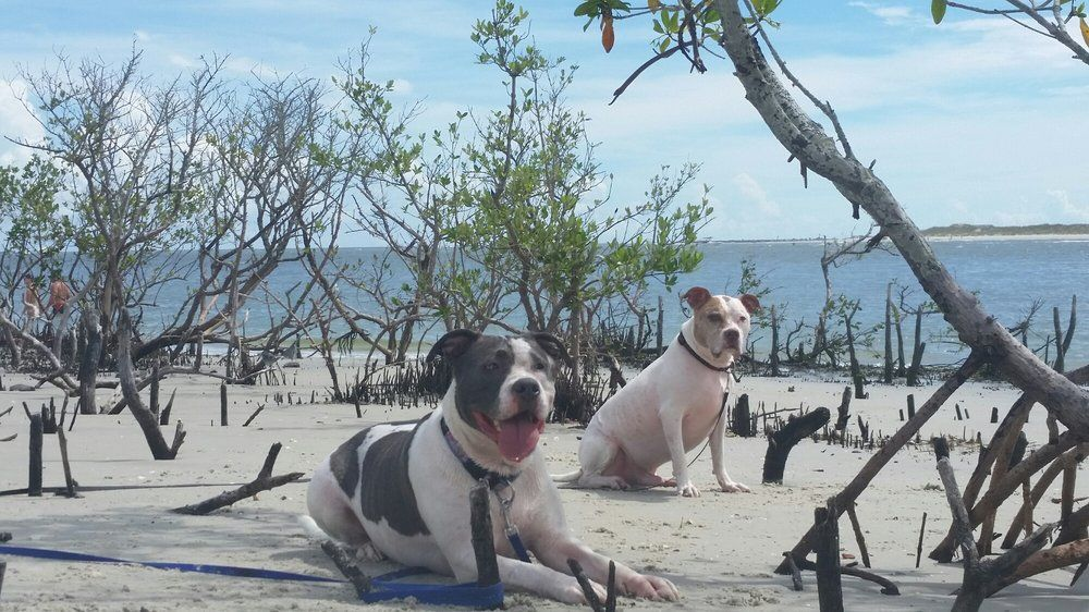 Dog friendly attractions in ponce inlet fl us dog
