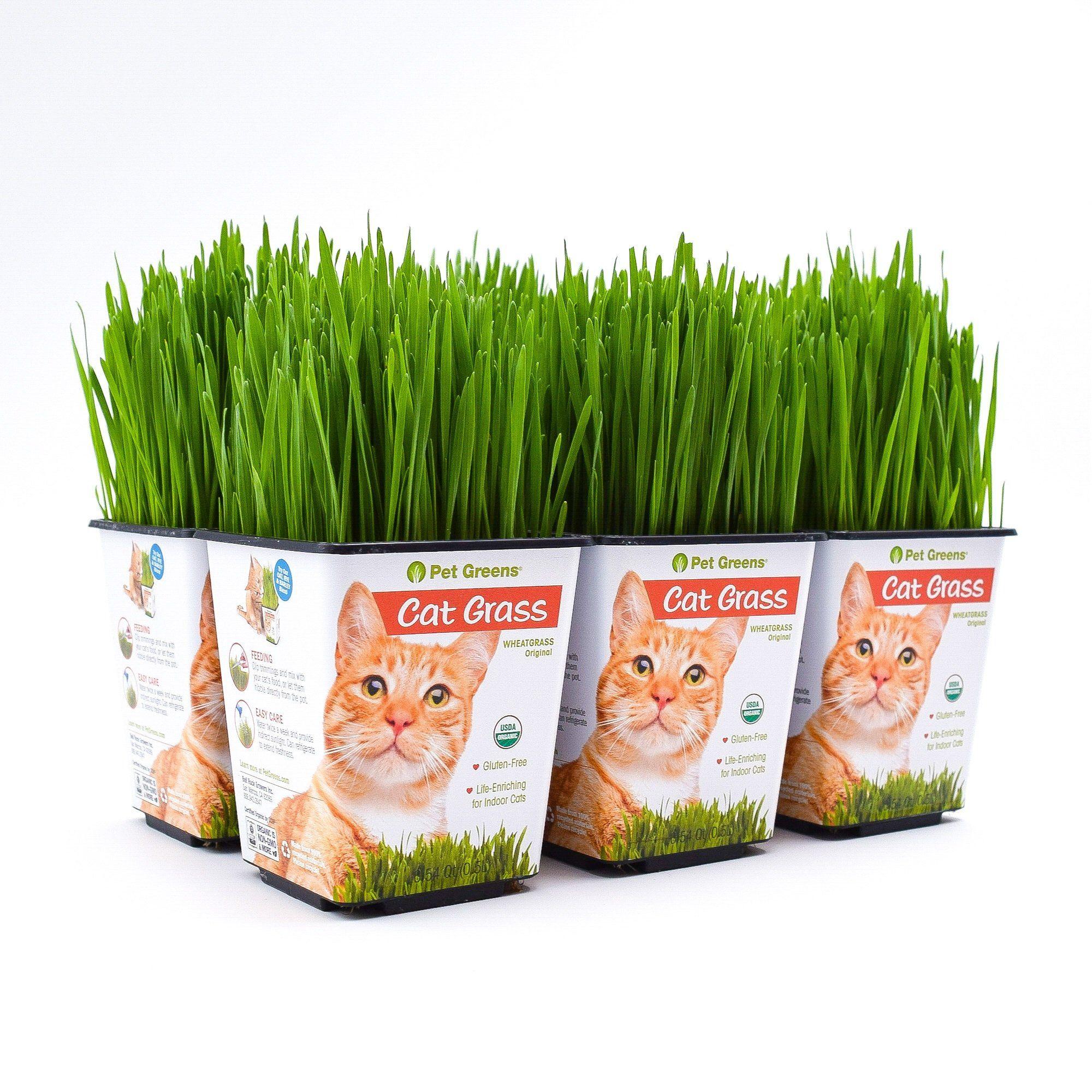 My Cats And Cat Grass Cat Grass Pet Grass Grass