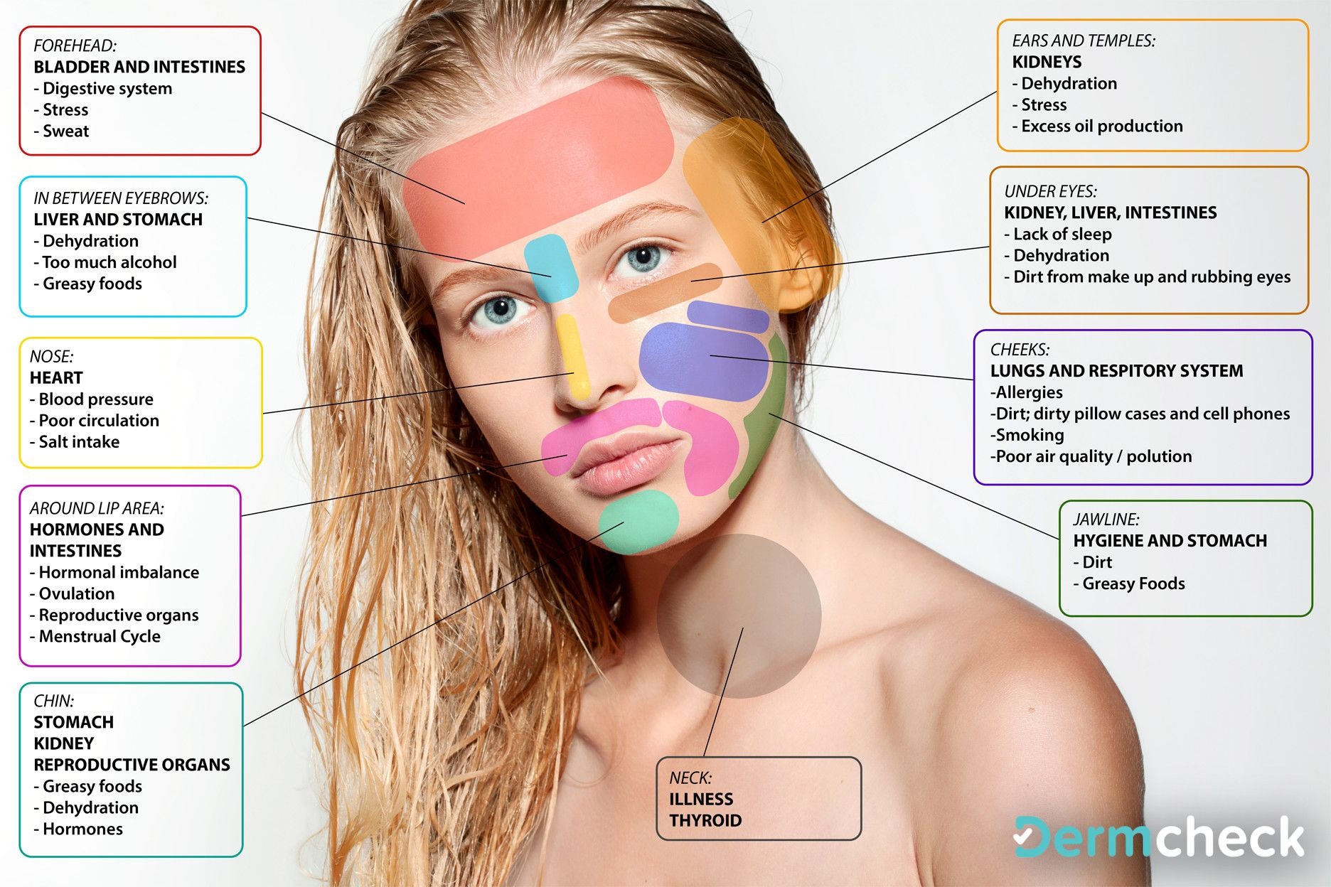 hight resolution of chinese face map pimple face mapping skin mapping face mapping spots facial acne